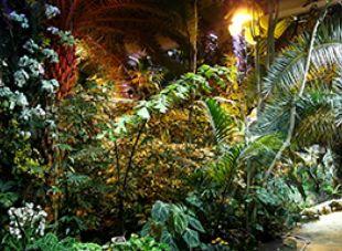 Новая система освещения Пальмовой оранжереи